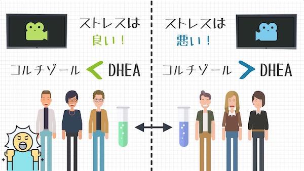 コルチゾールとDHEA