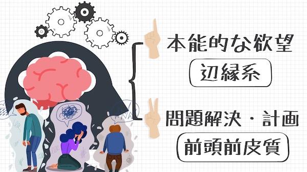 人間の脳と感情の仕組み