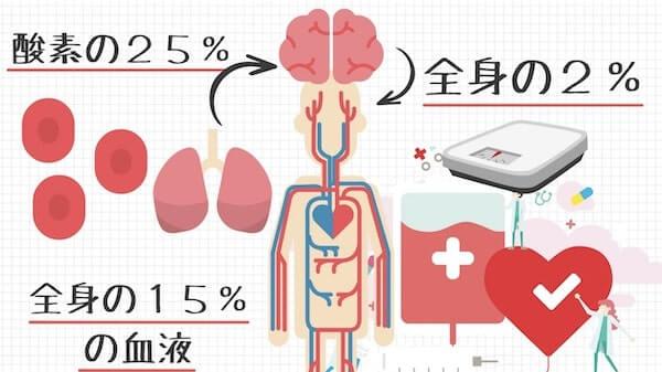 脳は全身の15%の血液を使う